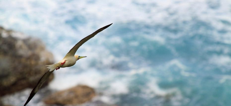 Willis Island, Australia (Cruising)